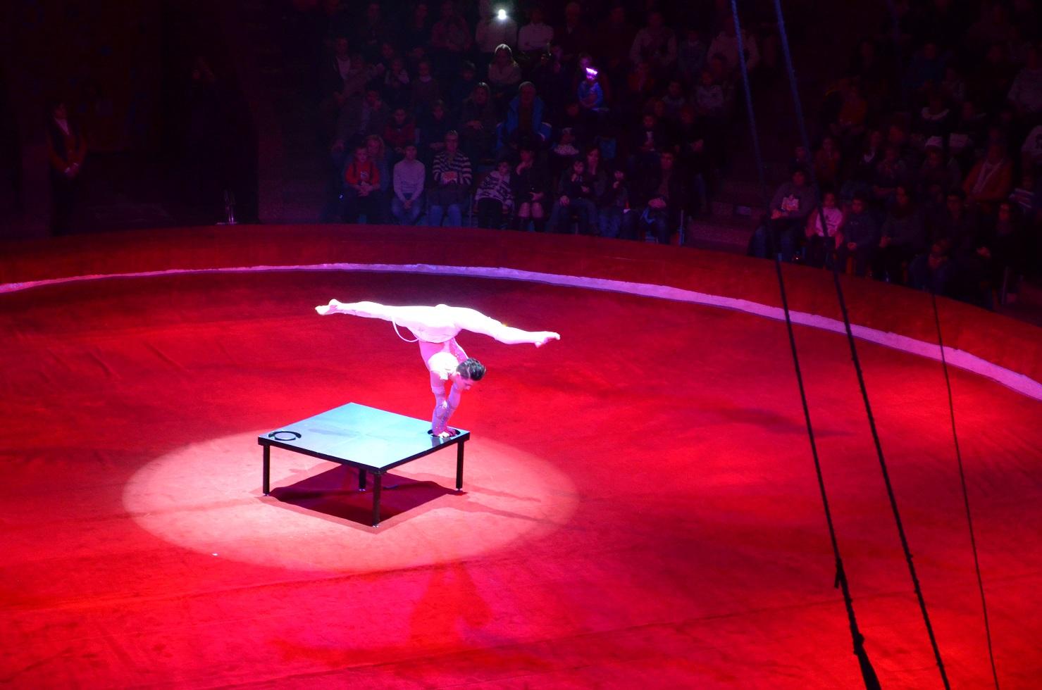 Kyiv_circus201501 (17)